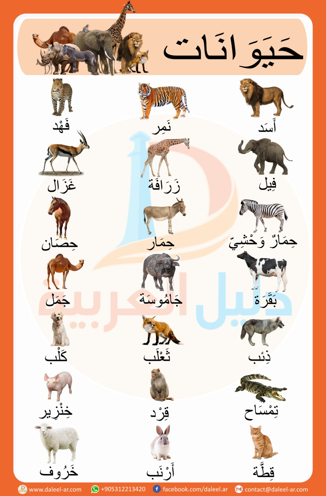 Animals in Arabic - الحَيَوَنَات بِاللُّغَةِ العَرَبِيَّةِ